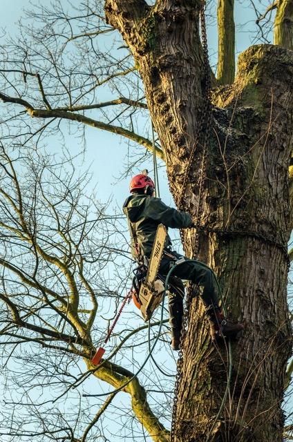 Foto boomwerken De Bever