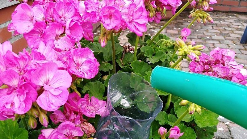 Efficiënt water geven aan jonge planten